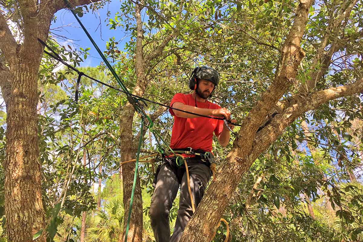 Installing A Dynamic Tree Cable Brace for Tree Support | Signature Tree Care in Naples, FL