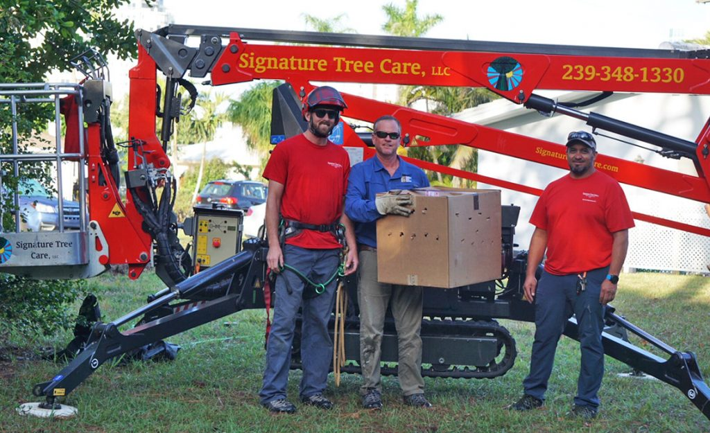 Naples Tree Service Assists with Re-nesting of Baby Eagle for Conservancy of SWFL | Signature Tree Care in Naples, FL