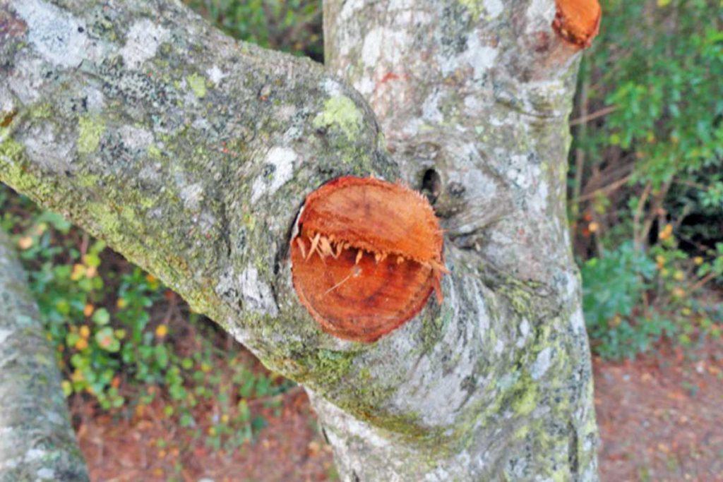 Tree Code Violation Options   Signature Tree Care Service of
