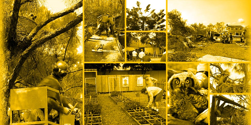 Local Arborist Community Volunteering | Signature Tree Care