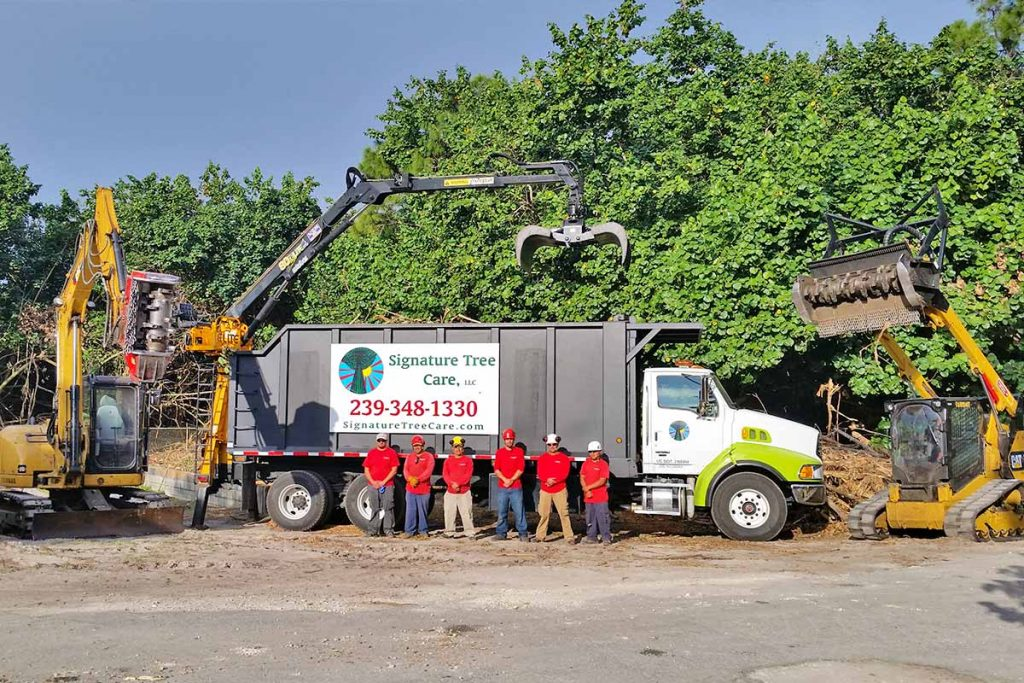 Land Clearing Service, Naples, FL   Signature Tree Care