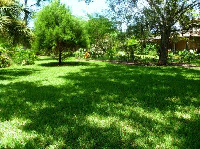 Organic fertilizing of Lawn, Landscape Beds, Trees & Palms