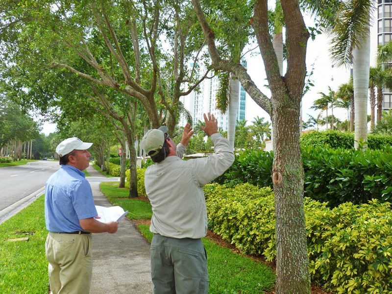 Arborist Consulting | Signature Tree Care in Naples and Ft. Myers, FL