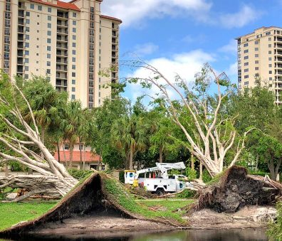 Emergency Tree Work | Signature Tree Care in Naples and Ft. Myers, FL