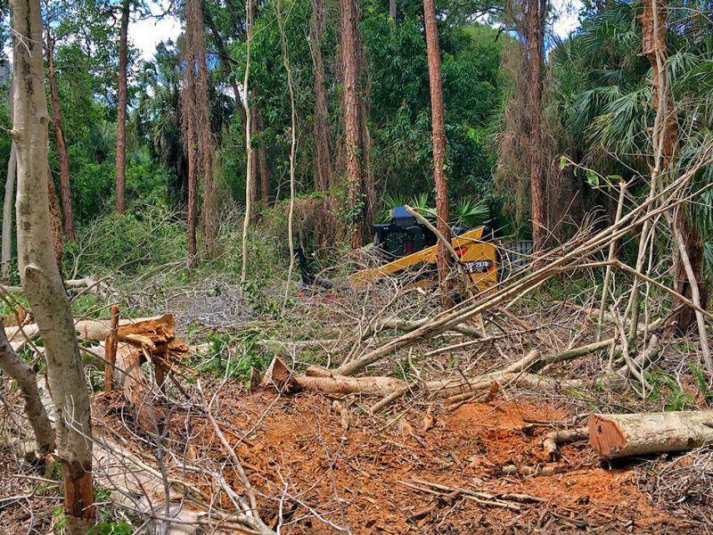 Land Clearing | Signature Tree Care in Naples and Ft. Myers, FL