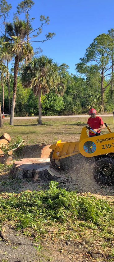 Stump Removal | Signature Tree Care in Naples and Ft. Myers, FL