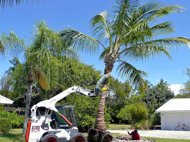 Tree Planting and Transplanting | Signature Tree Care in Naples and Ft. Myers, FL