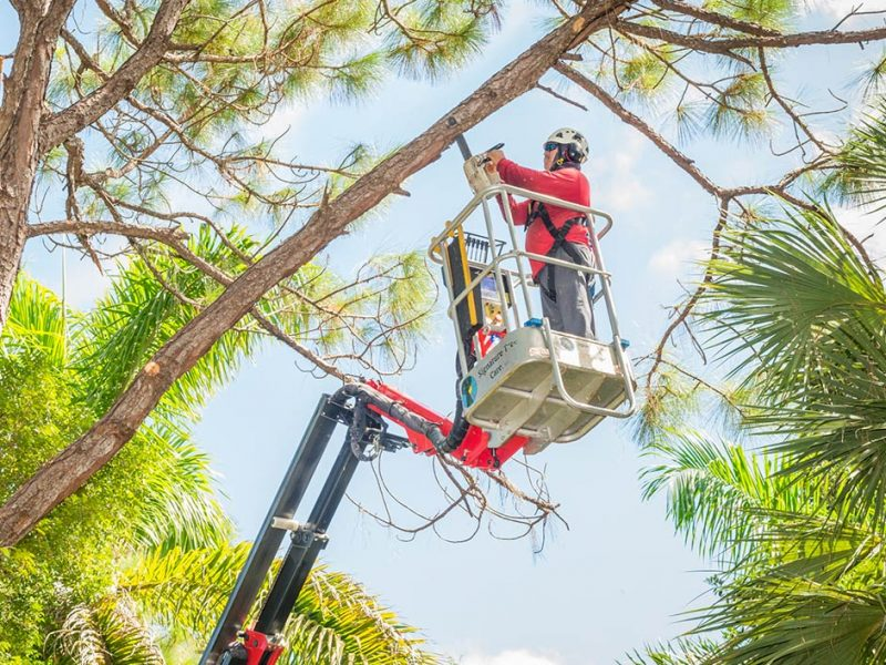 Tree Trimming and Pruning | Signature Tree Care in Naples and Ft. Myers, FL