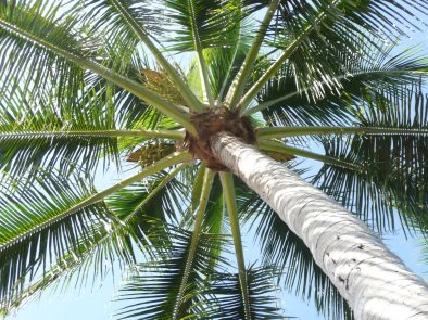 naples fl palm tree care