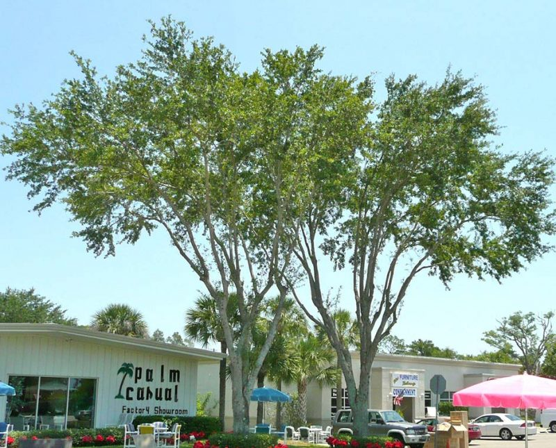 Tree Code Violation Options | Signature Tree Care in Naples and Ft. Myers, FL