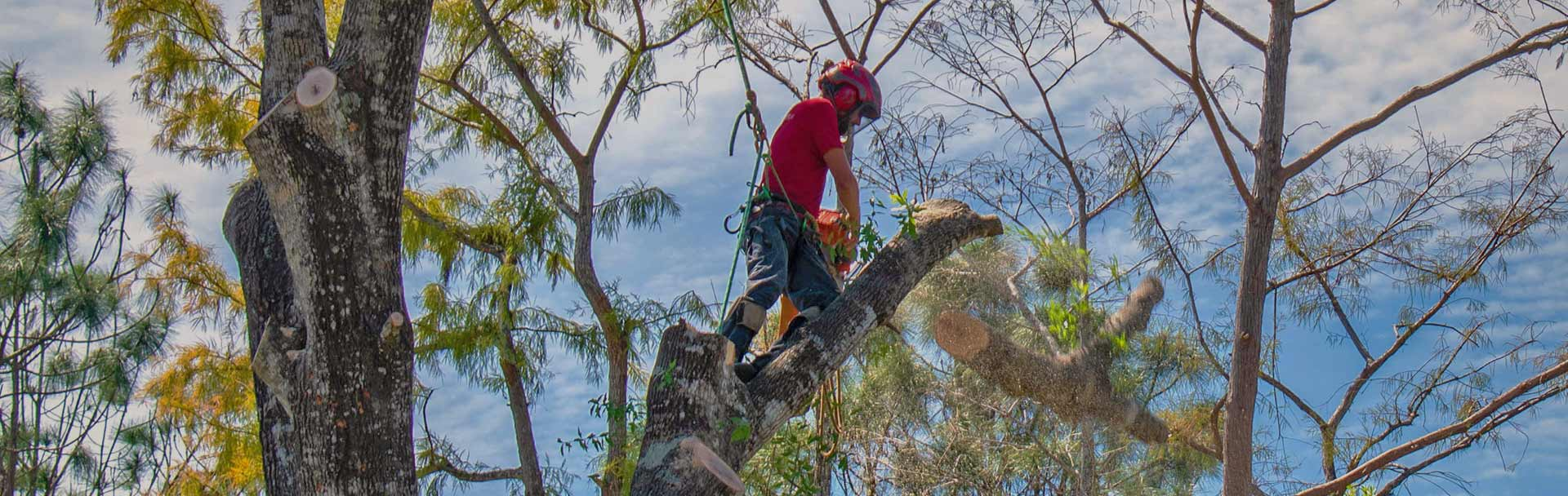 Tree Service & Solutions | Signature Tree Care, LLC
