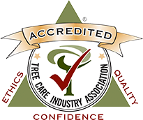 The ONLY Naples, FL Tree Service with Tree Care Industry Association (TCIA) National Accreditation | Signature Tree Care
