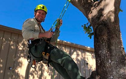 Naples Arborist Offers Private Tree Climbing Lessons | Signature Tree Care in Naples, FL