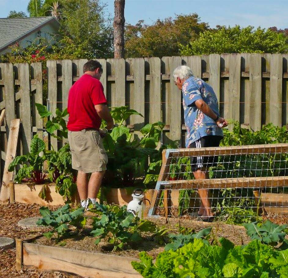 Vegetable Gardening & Greenhouse Installation Service | Signature Tree Care in Naples and Ft. Myers, FL