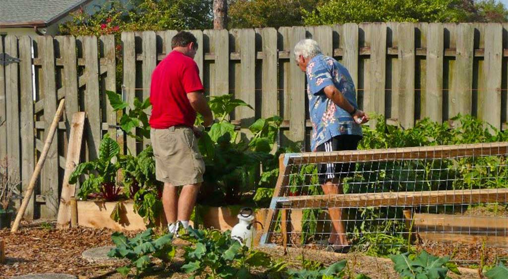 Vegetable Garden Greenhouse Installation Consultations by Signature Tree Care in Naples, FL